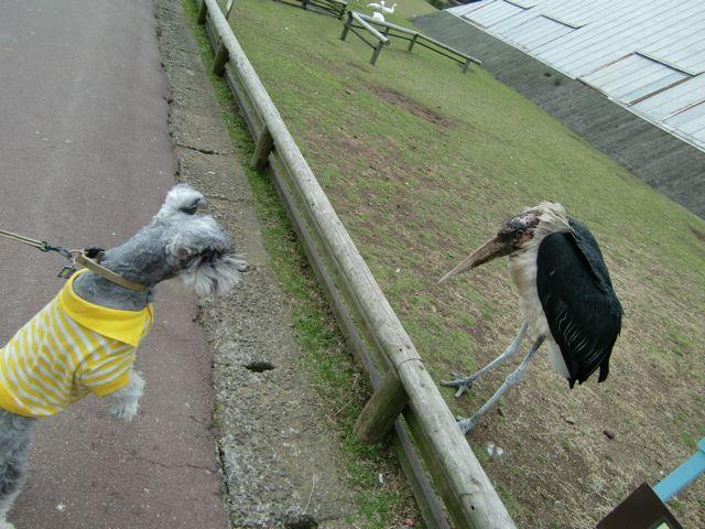 アフリカハゴコウ&ぬぅ.jpg