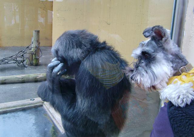 チンパンジー&ぬぅ.jpg